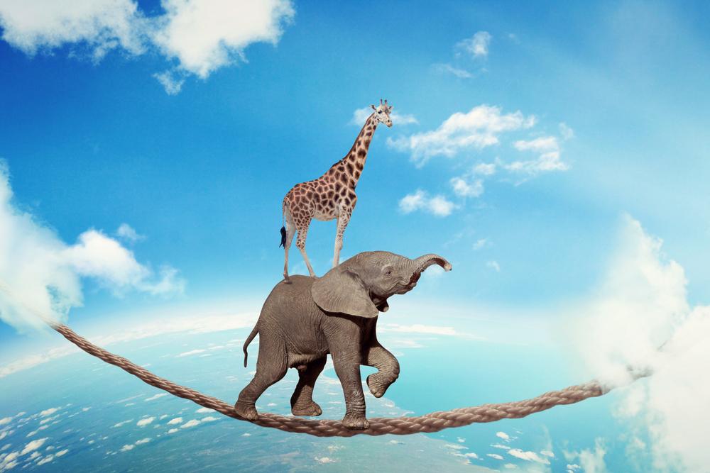 elephant tightrope walking with giraffe on it's back